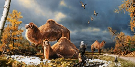 An artist's impression of the Arctic camel