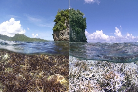 Bleaching in Samoa. Left image taken in December 2014, right in February 2015. Credit: XL Catlin Seaview Surve